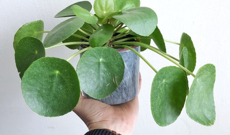 The Next Big Thing in Indoor Plants is...