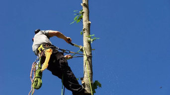 Hazardous Limb & Tree Removal