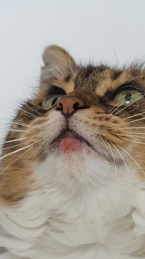 Cat S Lip Is Swollen Help