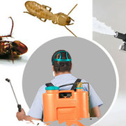 Residential Pest Control Perth's photo