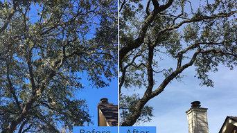 Yates Tree Inc
