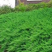 barplants123 barplants123's photo