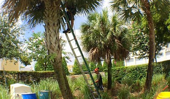 Palm trimming