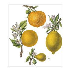 """""""Citrus and Oranges"""" Botanical Print, 60x70 cm"""