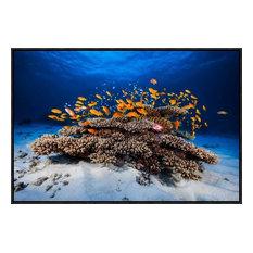 """Marine Life"" Artwork, 30""x20.1"""