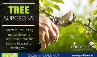 Tree Surgery Dublin