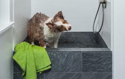Как справиться с грязью, которую приносят домой животные