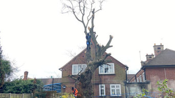 Timber Tree Specialists