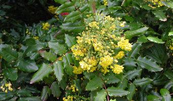 Best Garden And Landscape Supplies In Woodland Park CO