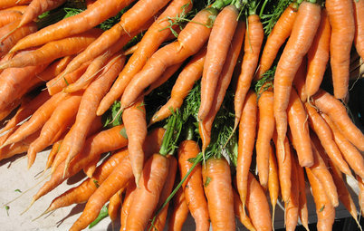 Cool-Season Vegetables: How to Grow Carrots