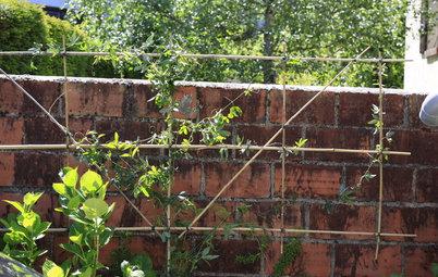 DIY : Créez un palissage pour vos plantes grimpantes