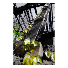 """Nature Taking Over"" Nature Photo, Botanical Unframed Wall Art Print, 20""x24"""