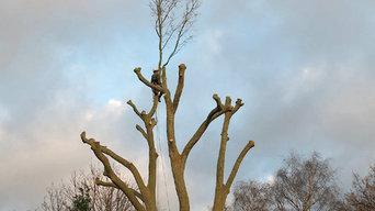 Dulwich tree surgery 9