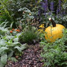 Enjoy Your Pumpkins Beyond Halloween