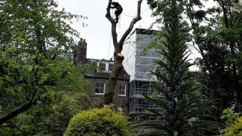 Felling an Ash tree