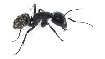 Ant Pest Control Vancouver