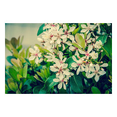 """""""Indian Hawthorn Shrub in Bloom Colorized"""" Nature Photo Unframed Wall Art Print,"""