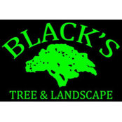 Black's Tree and Landscape's photo