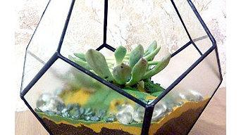 Флорариумы, светильники, шкатулки