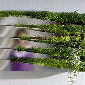 Miroir en Herbe Window Box