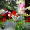 Кушать подано: Гид по питанию садовых и овощных культур