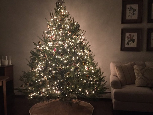 Christmas Tree Water.Christmas Tree In Front Of Hot Water Baseboard Heater A Fire
