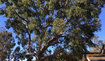 E. Channel Rd Oak tree pruning