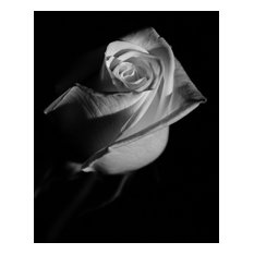"""""""Rose on Black"""" Nature Photography, Floral Unframed Wall Art Print, 24""""x36"""""""