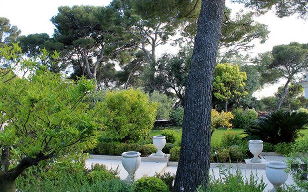 10 bonnes raisons de planter un arbre dans son jardin - Planter un eucalyptus dans son jardin ...