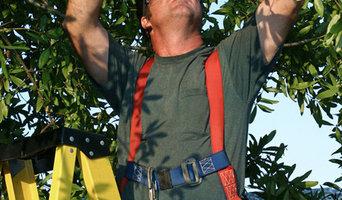 Tree Surgeon Sutton Coldfield