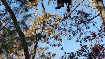 Tree Services in Needham, MA