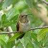 8 Flowers That Hummingbirds Adore