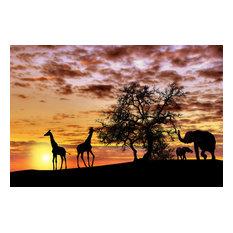 """""""African Sunset"""" Aluminum Wall Art by Aluminyze, 20x30"""