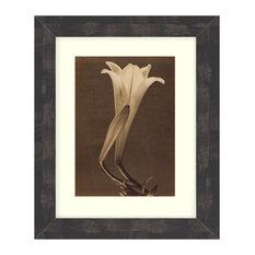 """Single Lily"" Sepia Tone Framed Photo, 16""X20"""