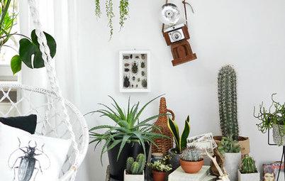 """Buchtipp: """"Wohnen in Grün – Dekorieren und Stylen mit Pflanzen"""
