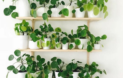 Pilea May Be Your Next Favorite Houseplant