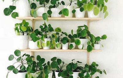 8 fikse og fine måder – sådan indretter du med stueplanter