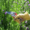 These Key Pruning Terms Will Help You Shape Up Your Garden
