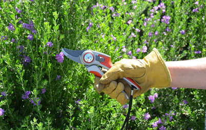 Key Pruning Terms to Help You Shape Up Your Garden