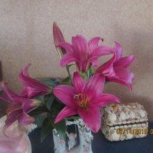 prple prince lily
