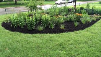 Buffalo Grass Lawn Alternative