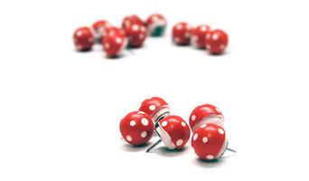 Magic Mushrooms - The Push Pins