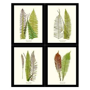FERNS ~ Print Set of 3 Botanical Kitchen Vintage Fern Prints Wall Decor Set 2417