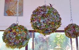 Succulent Orb Forms