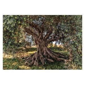 Olive Tree Mediterranean Photo Wall Mural, 368x254 cm