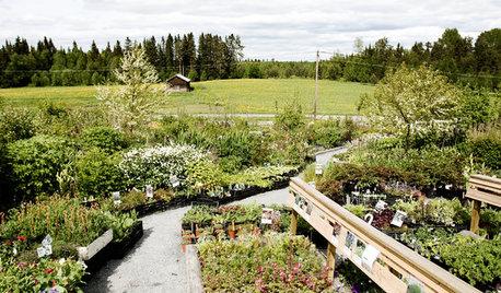 Möt tre tuffa trädgårdsmästare som odlar på nordliga breddgrader