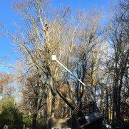 Tree Guys Tree Service's photo