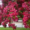 El jardín en otoño: Ahora es el momento de recoger las manzanas