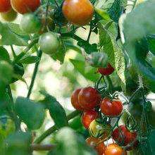 California Gardener: What to Do in July