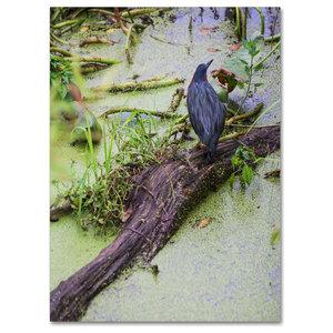 "Kurt Shaffer 'Green Heron II' Canvas Art, 47""x35"""